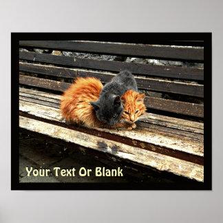Catnap Cuties Poster