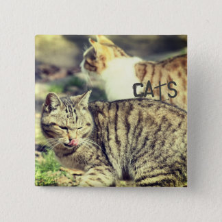 Cats 2 Inch Square Button