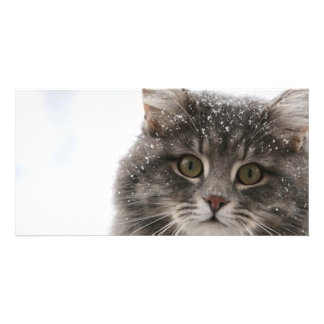 cats_and_snow15 snowfall pets animals furry cat customized photo card