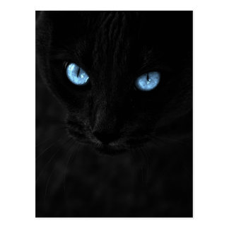 cats blue eyes postcard