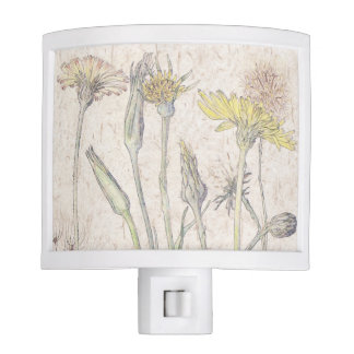 Cats Ear Wildflower Flowers Night Light