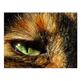 Cat's Eye Postcard