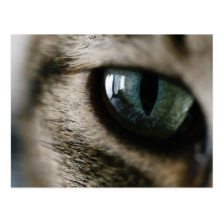 Cat's Eye Postcard
