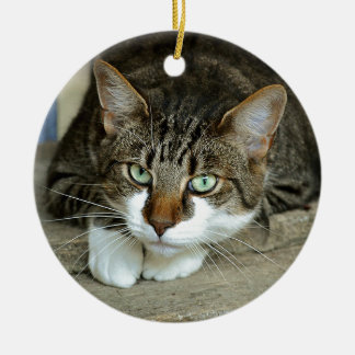 Cat's Eyes Ceramic Ornament