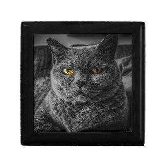 Cat's Eyes Gift Box