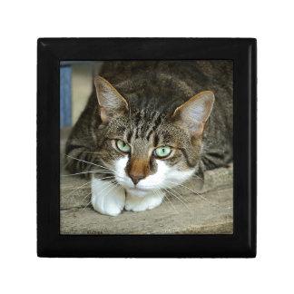 Cat's Eyes Gift Box