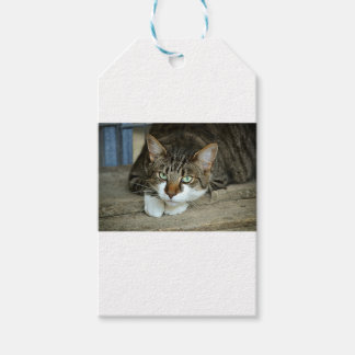 Cat's Eyes Gift Tags