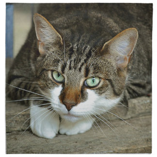 Cat's Eyes Napkin