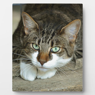 Cat's Eyes Plaque