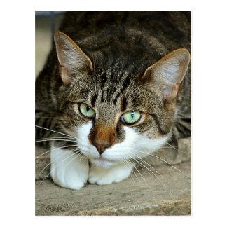 Cat's Eyes Postcard
