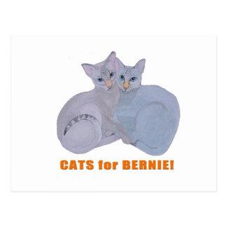 Cats for Bernie! Postcard