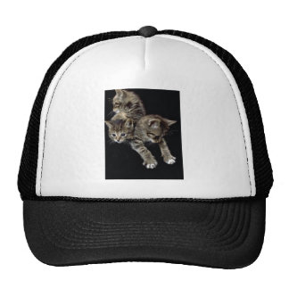 Cats Galore Hat