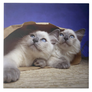 Cats in paper bag tile
