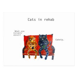 Cats in Rehab Funny Cat Art Postcard