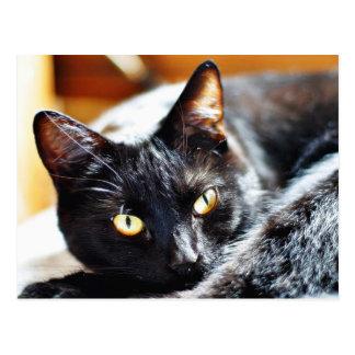 Cats Kitties Kitty Postcard