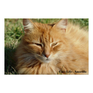 Cat's life - Amarillo Sleeping Poster
