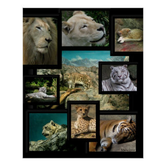 Cats of the Cincinnati Zoo ~ poster prints
