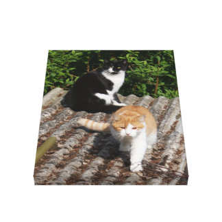 Cats on a Hot Tin Roof Photo, small Canvas Print