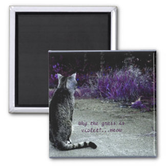 Cat's Philosophy Magnet