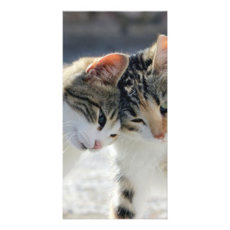cats photo greeting card