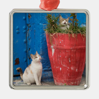 Cats playing around, Rabat, Morocco Silver-Colored Square Ornament