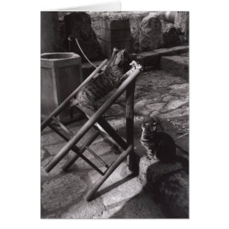 Cats Playing in Delphi, Greece (Greeting Card) Card