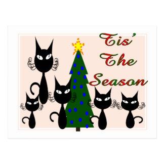 "cats ""tis' the season"" postcard"