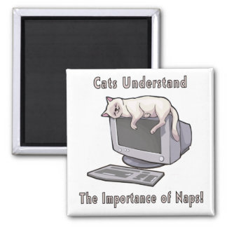 Cats Understand Magnet
