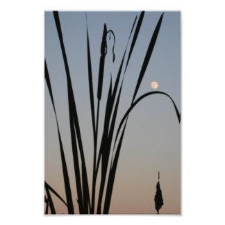 Cattail Moonrise. Photo Print.