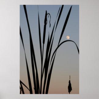 Cattail Moonrise. Poster Print.