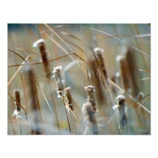 Cattails in the Breeze Framable Photograph