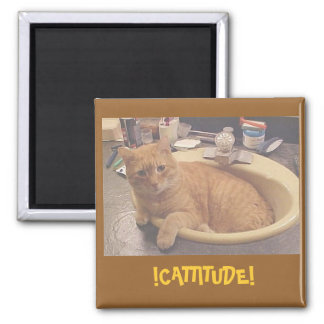 !CATTITUDE!, (Or why I can't clean) Magnet