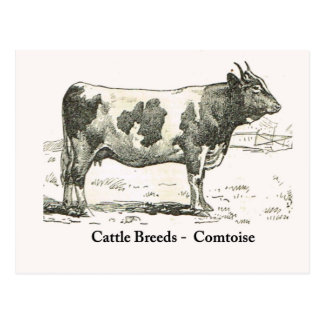 Cattle Breeds, France, Comtoise Postcard