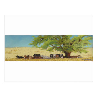 cattle, cow postcard
