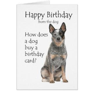 Cattle Dog Birthday Card