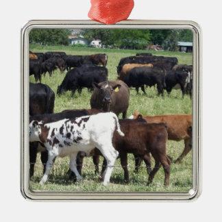 Cattle Herd Silver-Colored Square Ornament
