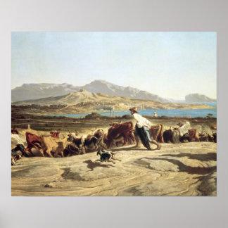 Cattle herding near Marseilles, 1853 (oil on canva Poster