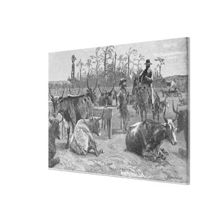 Cattle in a Kansas Corn Corral Gallery Wrapped Canvas