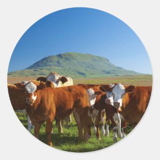 Cattle In Kamberg Valley, Kwazulu-Natal Round Sticker