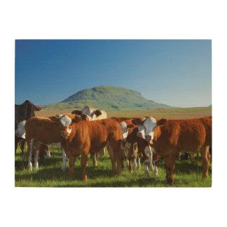 Cattle In Kamberg Valley, Kwazulu-Natal Wood Canvas