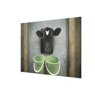 Cattle, Individual Pen Canvas Print
