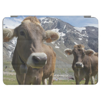 Cattle of the 'Alpine Brown' breed iPad Air Cover