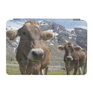 Cattle of the 'Alpine Brown' breed iPad Mini Cover