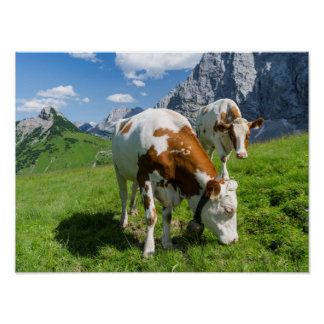 Cattle On High Pasture In Karwendel Mountain 2 Poster