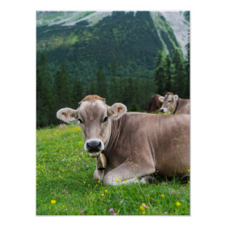 Cattle On High Pasture In Karwendel Mountain Poster