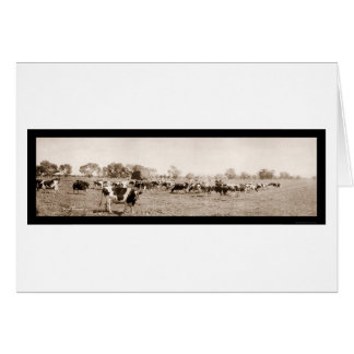 Cattle Ranching AZ Photo 1912 Card
