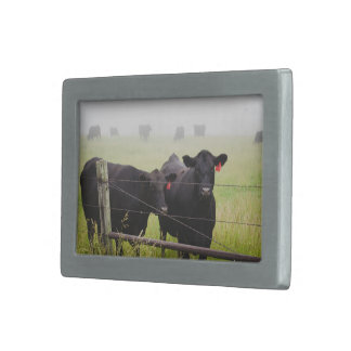 Cattle watching over fence belt buckle