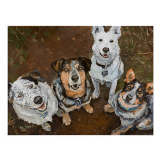 Cattledogs Cattle Dogs and Heelers Brown Hued Poster