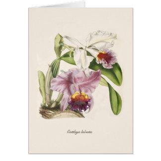 Cattleya labiata card