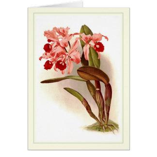 Cattleya lawrenceana card